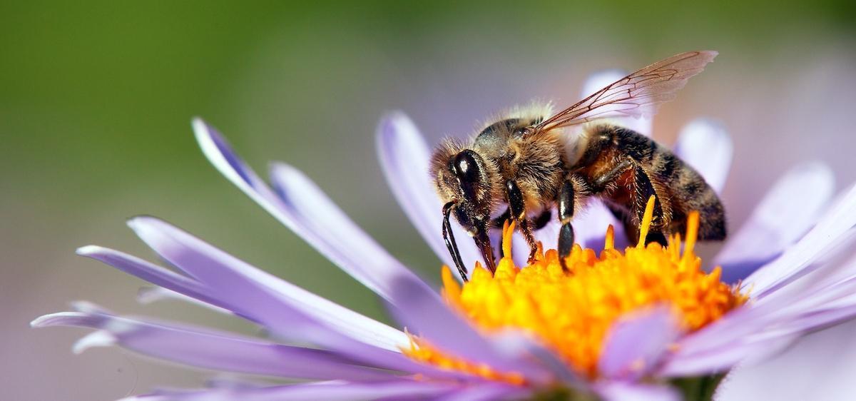 Gestes sauver abeilles