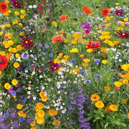 Sauver abeilles jardin fleurs plantes melliferes